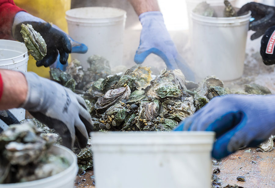 21st Annual Shuckin' in the Park Oyster Roast to be Held March 14